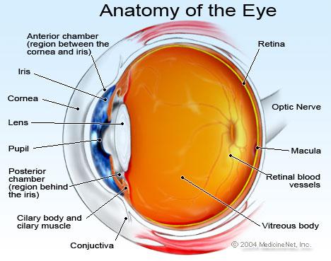 Eye Diagram Unmasa Dalha