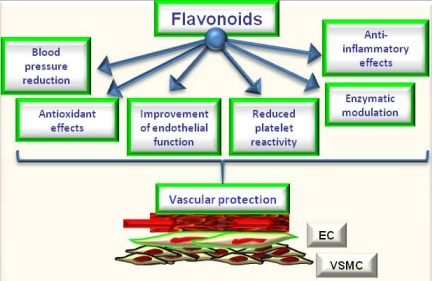 Flavoniods