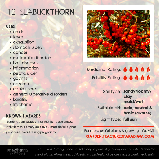 Sea Buckthorn Medicinal Uses