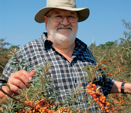 Sea Buckthorn and Cancer Prevention